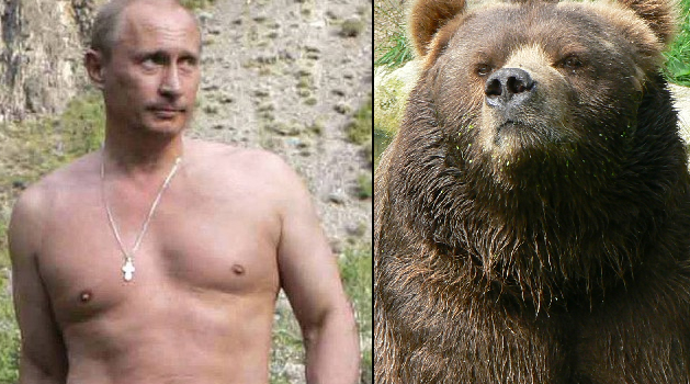 Poutine vs bear